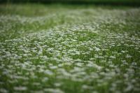 セリの花園(コジ君散歩コース) - お山遊び