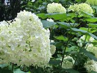お客様の言葉 - 蓼科高原オーベルジュ シャレーグリンデルで四季を愉しむ