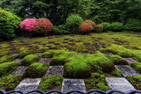 東福寺方丈庭園「八相の庭」のサツキたち - 花景色-K.W.C. PhotoBlog