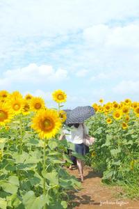 梅雨明け - jumhina biyori*