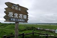 ◆ 北海道爆走 3,000km、その49「小清水原生花園」へ、お花編(2020年7月) - 空とグルメと温泉と