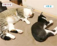 子猫の好きなもの - ちいさなチカラ