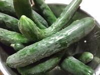 夏野菜もりもり - 月下逍遥