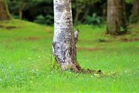 森も静かです - 綺麗な野鳥たち