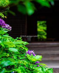 緑の景色。緑のお寺。 - Yuruyuru Photograph