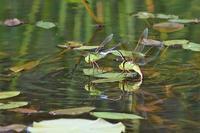 泉原方面Nikon 105マクロのテスト - 不定期更新 彩都付近の自然観察日記