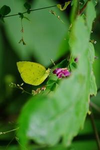 鳥や蝶がやってくる木や花を植えたい - 暮らしてみれば in Kitakaruizawa