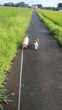 埼玉の実家にいる犬の鉄くんと仲良しの三毛の野良猫の散歩風景 - じゃポルスカ楽描帳