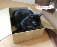 子猫のパワー - ちいさなチカラ