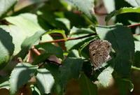 大暑大雨時行(たいうときどきふる) - 紀州里山の蝶たち