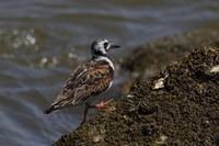 河口(2020年8月2日) - ほとんど野鳥写真日記