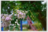 青メダカ - 花ありて 日々