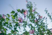 散歩写真 - IN MY LIFE Photograph