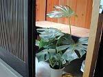 7月の坪庭 - 昭和の家とお片付け