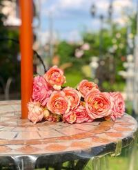 最後の輝きの2番花♡新種の白くま♪ - 薪割りマコのバラの庭