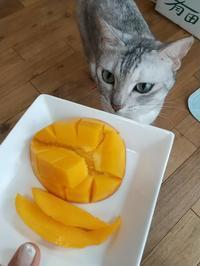 マンゴーとにゃんず♪ - なんくるないさ~、ワンッ!!