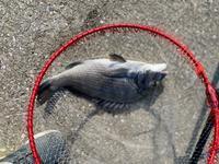 8月1日天草市軍ヶ浦漁港へカゴ釣りに行く - ステンドグラスルーチェの日常