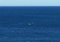 クジラと幻のCafe - アデレードの片隅で2