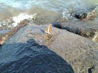波が・・・・ - 晴れ時々?日記