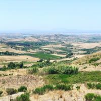 バカンス5日目、午後は我が家のオリーブ農園をチェックしにいく。 - 幸せなシチリアの食卓、時々にゃんこ