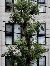 窓 - 四十八茶百鼠(2)