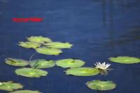 尾瀬にいった気分を - ジージーライダーの自然彩彩