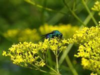 青い蜂 - Magnolia Lane 2