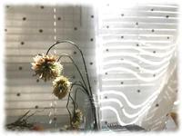 今日はステイホーム - マリカの野草画帖