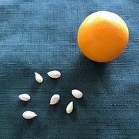 マイヤーレモン - 緑のしずく (ベランダガーデン便り)