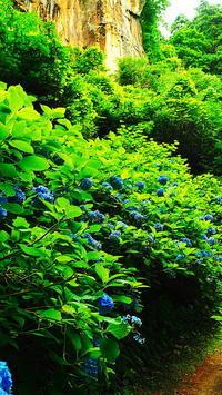 立石寺参道の紫陽花Ⅱ - 風の香に誘われて 風景のふぉと缶