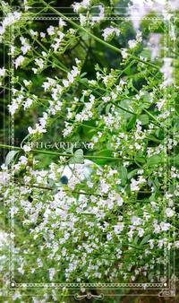 小さな白色たち - どんぐりの木の下で……