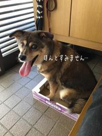 愛車自慢…(>人<;)写真とれなくて… - 阿蘇西原村カレー専門店 chang- PLANT ~style zero~