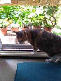暑さ対策 - ミケトラの日記のようなもの