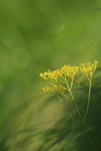 今日の向島百花園オミナイシ - meの写真はザンス