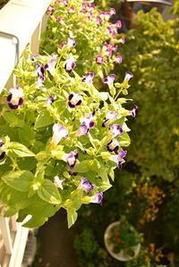 梅を干す、、、 - hanasdiary.exblog.jp