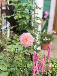 ドストライクのバラ達♡と梅雨明けはやる事がいっぱい(^ ^) - 薪割りマコのバラの庭