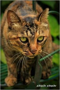 野生ネコゆずちゃん - 今が一番