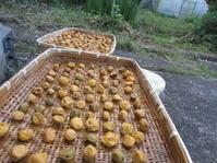 土用梅雨明けの干ばつ水源 - 南阿蘇 手づくり農園 菜の風