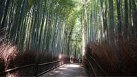 京都、嵐山の竹林でリフレッシュ - Picsyosshi115's Blog