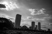 朝から夏空だった - photolog-ミヤコワスレ