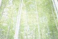 竹林にて - 瞳の記憶