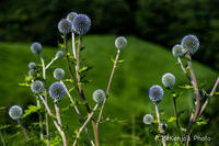 真夏の収穫 - 撃沈風景写真