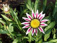 花と鳥 - しらこばとWeblog