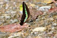 林道の蝶 - はっぴいでいず