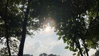 日々のコトの葉だより vol.6〜夏はじまりました〜 - 北軽井沢スウィートグラス
