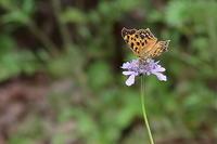 秋の気配 - 上州自然散策3