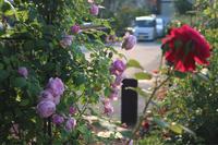 梅雨が明けたので*2020薬剤散布4回目 - my small garden~sugar plum~