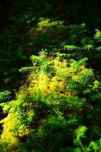 森の中の小宇宙 - 風の香に誘われて 風景のふぉと缶