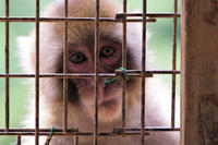 Eyes in the cage - Taro's Photo