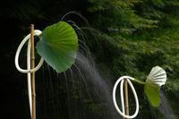 蓮シャワー - 夢・ファンダンゴ
